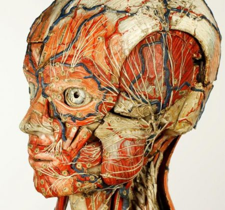 Anatomical male closeup, copyright Tim Harland.