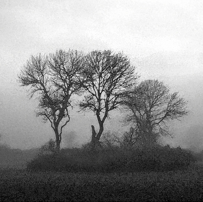 Thee leafless trees in mist.
