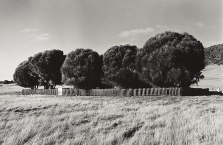 Ricky Maynard , The Healing Garden, Wybalenna, Flinders Island, Tasmania 2005, from the series Portrait of a distant land, gelatin silver photograph, Art Gallery of New South Wales, purchased with funds provided by the Aboriginal Collection Benefactors Group and the Photography Collection Benefactors Program 2009, © Ricky Maynard. Licensed by Viscopy, Sydney