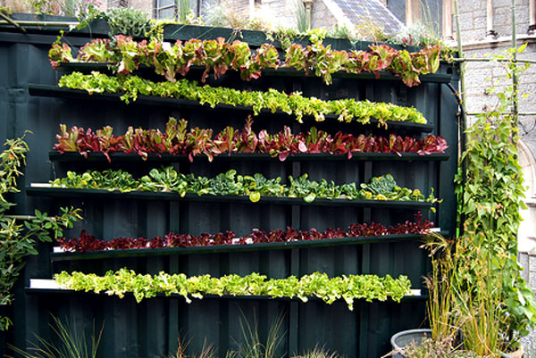 Growing food in small spaces - Image
