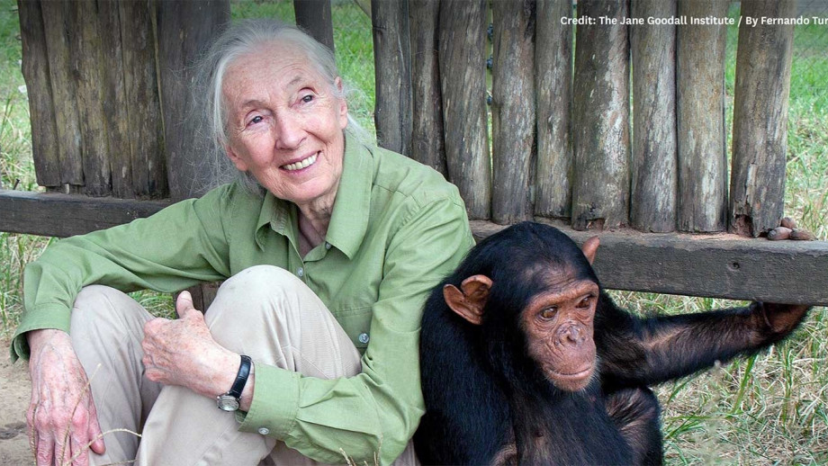 An Evening With Jane Goodall - Image