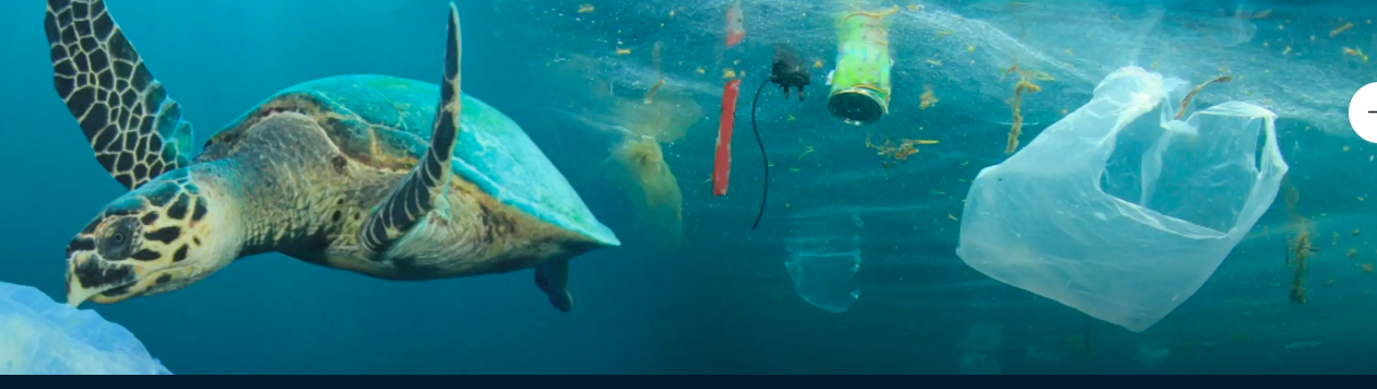 Drowning In Plastic: Free screening - Image